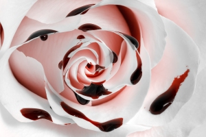 stockvault-blood-rose-macro---hdr133786
